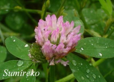 flower 2009.6.7.jpg